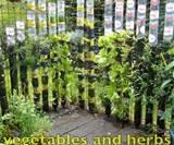 Gardening Vertical Vegetable Garden