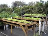 raised bed garden plans vegetable