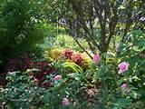 rose garden tyler texas tyler tx pinterest