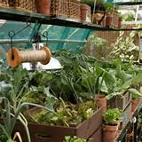 new year new garden january gardening projects gardening ideas