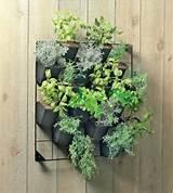 Vertical garden ideas | For the Home | Pinterest