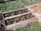 25 DIY Ideas Using Pallets for Raised Garden Beds - Snappy Pixels