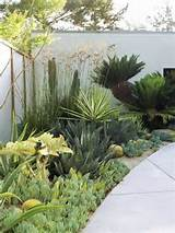 ... -small-garden-drought-tolerant-garden | Great Gardens & Ideas | Pi