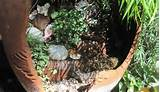 garden ideas fairy garden plant ideas fairy garden ideas youtube fairy