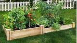 backyard vegetable garden ideas | Home Interior