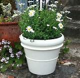 ... > Container Gardening > Shade Container Plants Flower Ideas