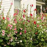 So sweet! | Cottage Garden Ideas | Pinterest