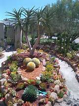 succulent garden desert landscaping ideas pinterest