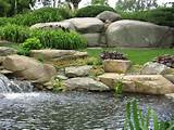 water garden plants in Connecticut by Matthew Giampietro Water Gardens ...