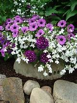 pin by mojo on best ever garden ideas pinterest