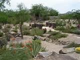 Desert landscaping, tucson style | Desert Landscaping | Pinterest