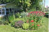 butterfly garden plants cottage gardening 2 jpg