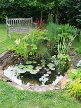 small garden ponds on pinterest fish ponds raised pond and garden