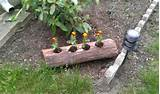 log planter garden ideas outdors decor log plants gardening stuff