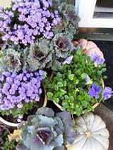 Fall gardening tips | gardening / flowers / unique ideas | Pinterest