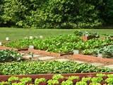 Vegetable Garden Ideas and Designs | Garden | Pinterest
