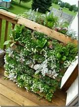 Vertical wood pallet garden | Garden Ideas | Pinterest