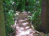 Garden. Creative Inexpensive Garden Path Ideas: For Instance Paths ...