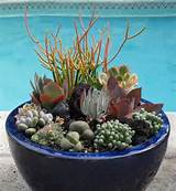 www shelterness com 35 indoor and outdoor succulent garden ideas like