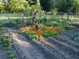 designing a vegetable garden pretty vegetable garden ideas