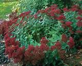 Very informative!: Garden Flowers Deck Yard, Plants Perennials, Garden ...