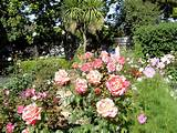 Rose Garden Design Ideas Garden Design Rose Garden