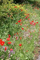 Small garden ideas - wild flower boarder | Plants - Gardening | Pinte ...