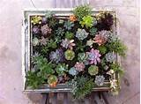15 Cool DIY Succulent Gardens For Your Home | Shelterness