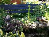 Plant a succulent garden bench: 9+ DIY Succulent Garden Ideas at ...