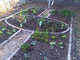 The Life of a LA Gardener: winter vegetable garden