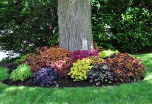 coleus is one plant that i find is a bit ploarizing you either like