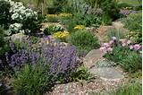 Landscaping Ideas, Xeriscape Plant, Colorado Gardening, Colorado Plant ...