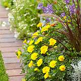 Plant-A-Front-Flowerbed-101976462-09.jpg
