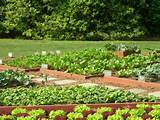 small backyard vegetable garden ideas small backyard vegetable garden
