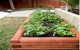 raised bed garden plans for minimalist gardening diy raised garden