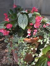 container for shade container gardening pinterest