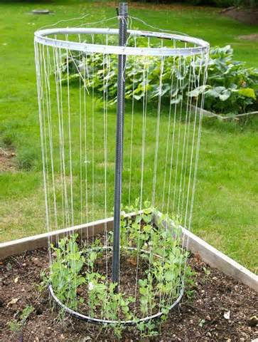 vegetable gardening with mike the gardener a really cool trellis from