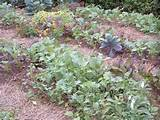 fall garden gardening pinterest
