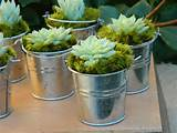 Succulent Wedding Favor Succulent Bridal Shower Favor by tobieanne