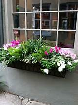 Window boxes...can dress up the plainest of windows!
