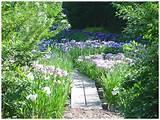 François Goffinet - Iris Garden | garden ideas | Pinterest