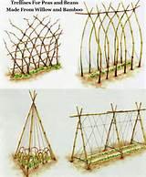 permaculture ideas trellis ideas