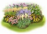 Xeriscape Garden Plan