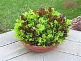 garden fresh salad via flickr garden ideas outdoor decor pint