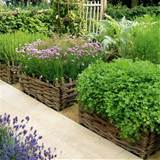 Vegetable-Garden---Garden-Clinic---Homes--Gardens.jpg