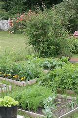 vegetable garden outdoor gardening ideas pinterest