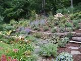 garden pinterest perennial gardens perennials and hillside garden