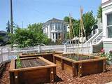 an urban area has been replaced with raised beds and drip irrigation