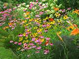 butterfly garden flowers pinterest