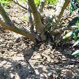 Wash off trees and plants that may harbor aphids, ants and scale. Hand ...